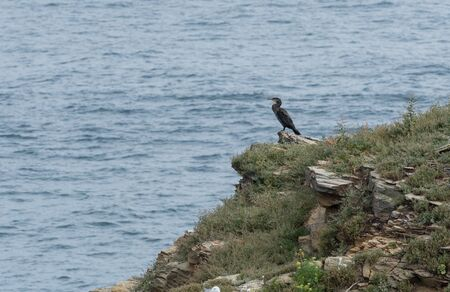 A lonely cormorant watched from the top of a rock to go out for his fishing
