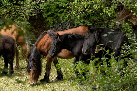 Nice photos of beautiful horses inside a forest in Spain