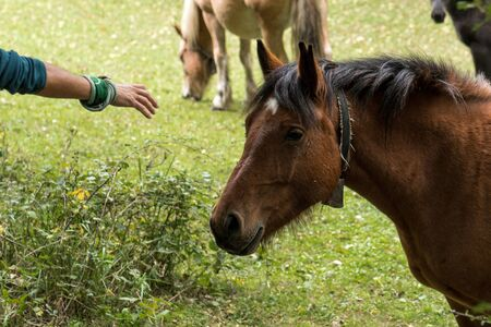 A nice horse approached to caress him inside a forest