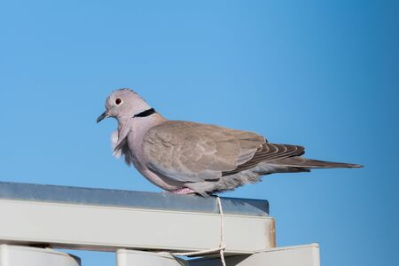 Red-eyed gull perched on a railing iron with a blue sky as a background