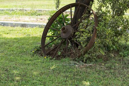 Very old cast iron cart wheel supported by a tree