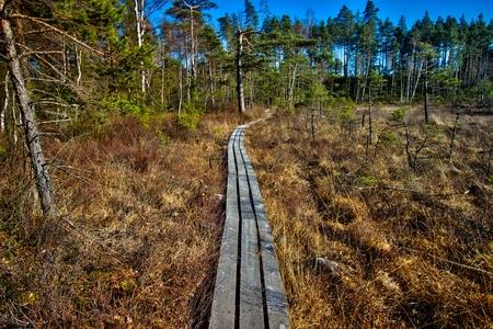 Path on the Havsjöleden natural reserve in Bredaryd – Sweden Stock Photo
