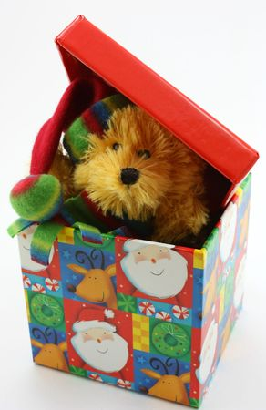 peaking: Stuffed bear toy peaking out of Christmas box, on white background
