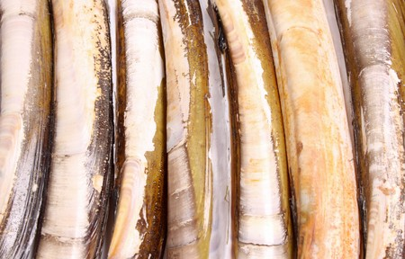ensis:  Ensis directus, also known as the American jackknife clam or razor clam