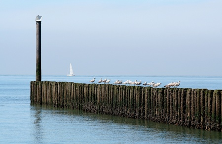 pales: Gulls resting on the pales of a breakwater Stock Photo