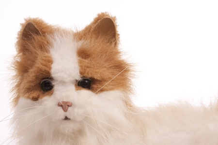 domestication: Artifact cat
