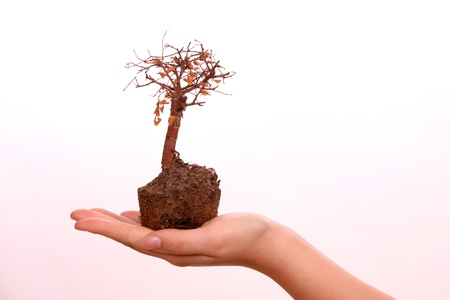 Young female hand in a studio setting against a white background  showing a dead bonsai tree Stock Photo - 11317057