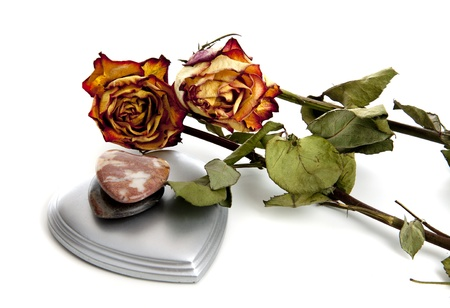ceased: Ceased blossoming of a beatifull rose interpretating  a lost or broken love Stock Photo