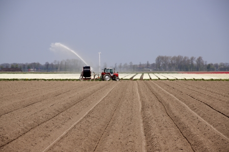A tractor is pumping water over bulb field in the Netherlands photo