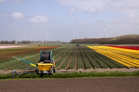 Bulb fields are still an enormous touristic attraction and a great economic product photo
