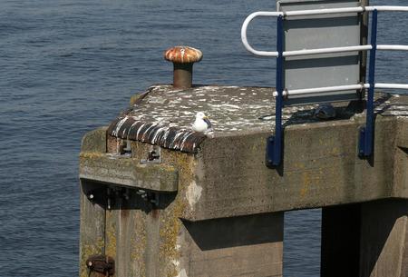 Een zeemeeuw zit in de haven