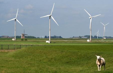 Eemshaven,Groningen, july 2016: Lamb on the meadow near Wind farm
