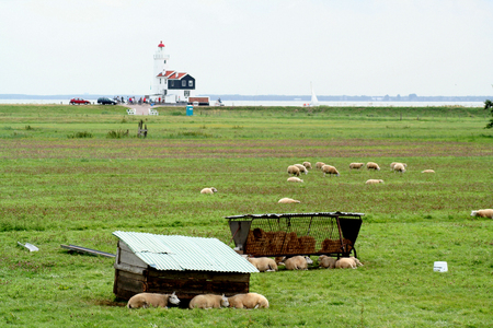 Netherlands,North Holland,Marken, june2016: meadows and rural land in the island of Marken Editorial