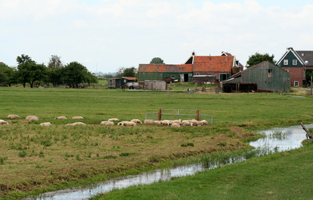 Netherlands,North Holland,Marken: meadows and rural land in the island of Marken