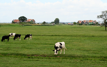 Netherlands,North Holland,Marken, june2016: meadows and rural land in the island of Marken 写真素材