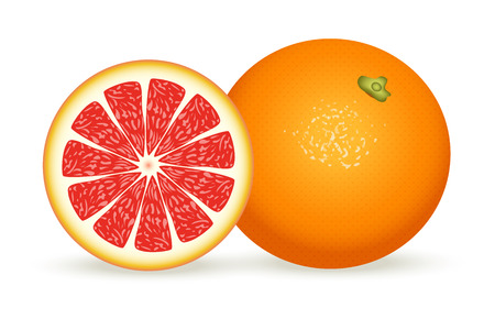 Fresh grapefruit in realistic style. Vector illustration isolated on white background.