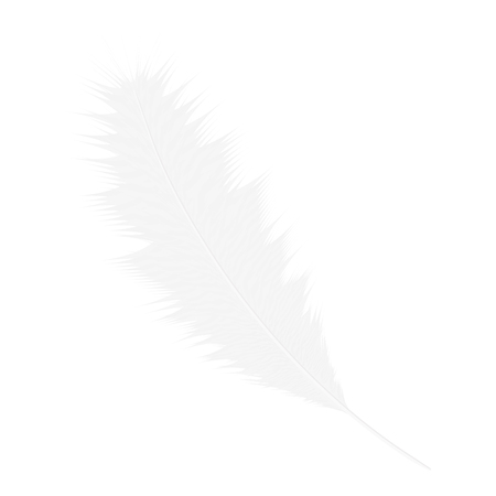 Realistic white bird feather.Vector illustration isolated on a white background