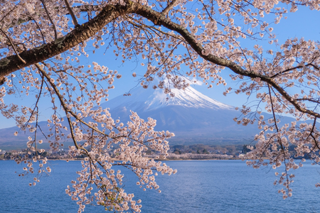 Mount Fuji with snow capped, blue sky and beautiful Cherry Blossom or pink Sakura flowers in Spring Season at Lake kawaguchiko, Yamanashi, Japan. landmark and popular for tourist attractions Imagens