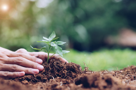 hands holding young plant growing on soil with green background. Earth day, environmental and Ecology concept