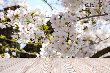 Empty wood table with beautiful pink cherry blossom flower background in spring season, at Lake kawaguchiko, Yamanashi, Japan. Mock up for your product display or montage Stock Photo