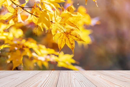 Empty wood table mockup on yellow maple leaves background in the garden with copy space for text, Mock up for your product display and montage in autumn season, thanksgiving and Halloween holiday