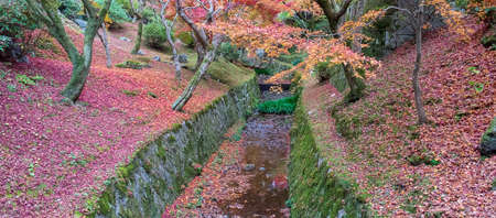 colorful leaves in the garden at Tofukuji temple, landmark and famous for tourist attractions in Kyoto, Japan. Autumn foliage season, vacation and travel concept Reklamní fotografie