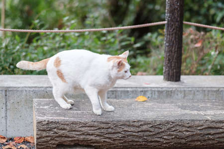 White cat in the garden. pet and International cat day concept