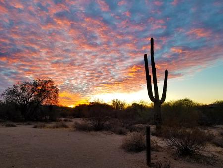 Scottsdale Arizona Sunrise And Cactus Archivio Fotografico
