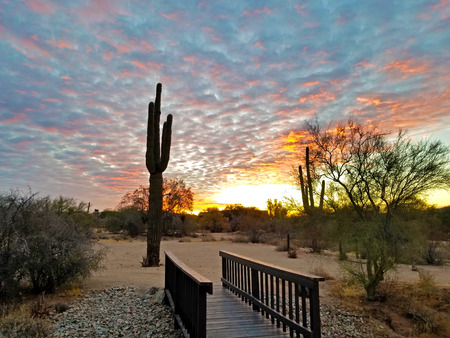 Scottsdale Arizona Sunrise With Cactus and Bridge