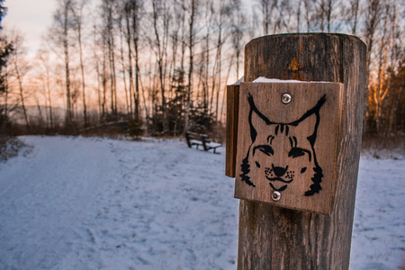 wooden sign of lynx in winter landscape, walking trail sign leading to lynx sanctuary in Harz Mountains, Germany