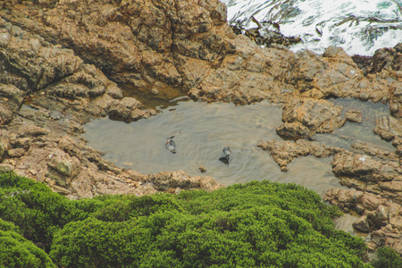 Seals resting on cliffs at Nugget Point viewpoint in Otago, South Island, New Zealand