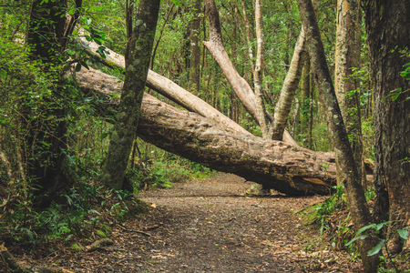 Árbol caído en un sendero en Nueva Zelanda Foto de archivo