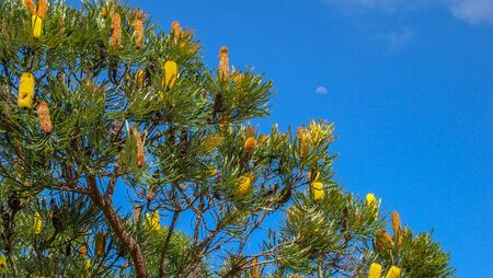 Yalgorup National Park near Mandurah, Western Australia Stok Fotoğraf