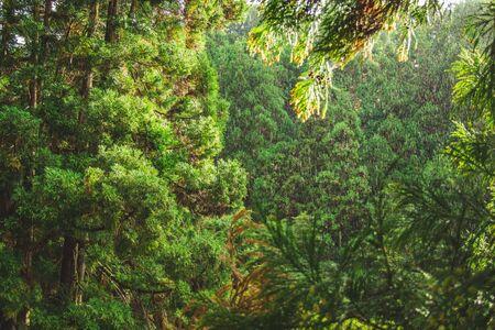 Regentag im Wald des Parque Natural da Ribeira dos Caldeiroes, Sao Miguel, Azoren, Portugal Standard-Bild