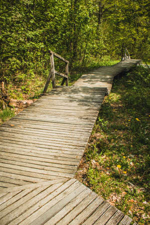 Hiking trail in German forest. Scenic wooden boardwalk in Rothaar Mountains in Northrhine-Westphalia state Imagens