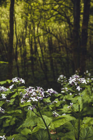 Beautiful wild flowers in forest. Lush green landscape in Rothaar Mountains in Northrhine-Westphalia, Germany Imagens