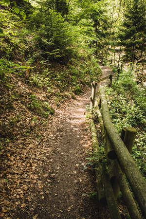 Hiking trail in German forest. Scenic footpath in Rothaar Mountains in Northrhine-Westphalia state Imagens