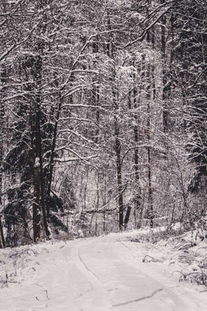 Moody snow covered landscape in German forest Imagens