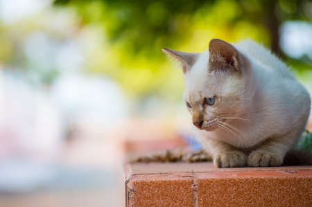 cat in temple photo
