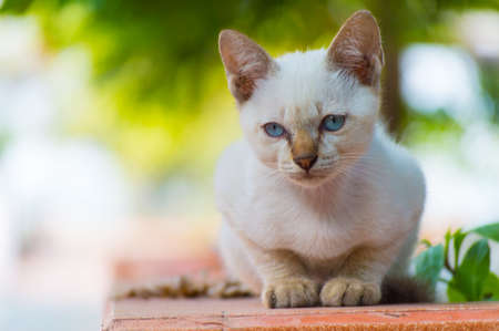 cat on a red brick photo