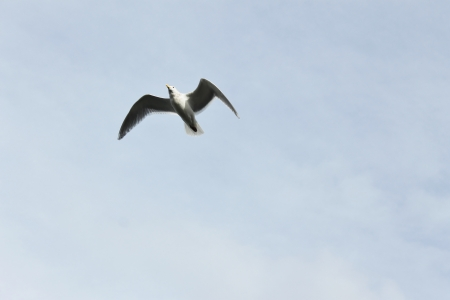 baptize: One seagull over the sky