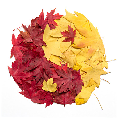 Yin Yang symbol made with autumn leaves photo