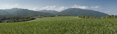 Cornfield in the region of Baix Montseny, Catalonia, Spain
