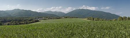 Maisfeld in der Region Baix Montseny, Katalonien, Spanien Standard-Bild - 30703909