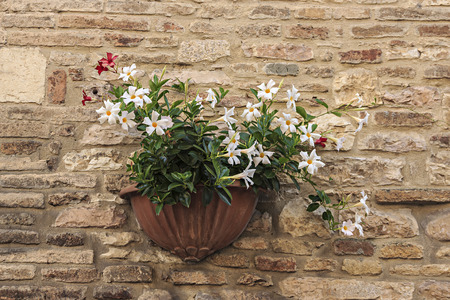 Flowerpot on the streets of Assisi Stock Photo