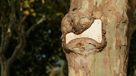 Notice plate swallowed by a tree. Standard-Bild