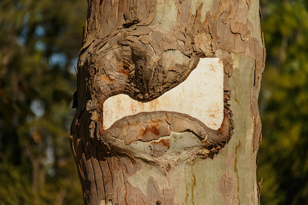 Notice plate swallowed by a tree. Stock Photo