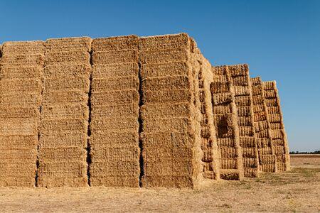 Straw bales at Ribera de Duero fields Standard-Bild - 133739453