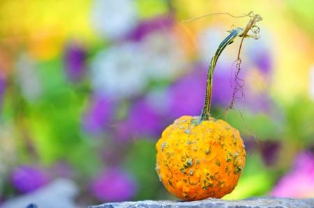 Harvested pumpkin Stock Photo - 8783875