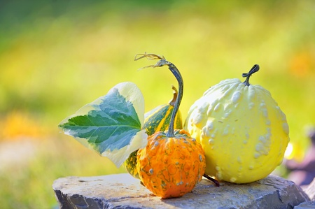 Harvested pumpkins Stock Photo - 8783876